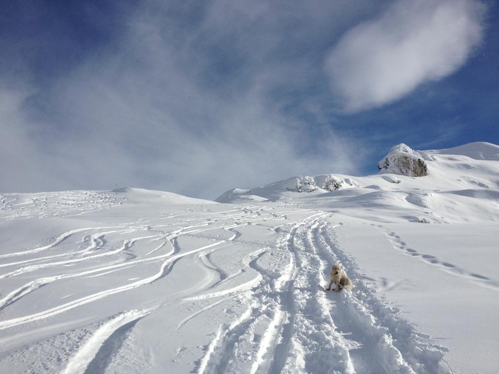 Skitour Spuren im Schnee - Schilt