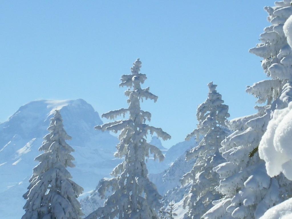 Naturfreundehaus Fronalp Aussicht Winter Tannenbäume und Toedi
